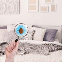 Infestation de punaises de lit : que faire ?