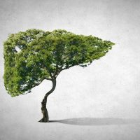 5 plantes pour détoxifier le foie